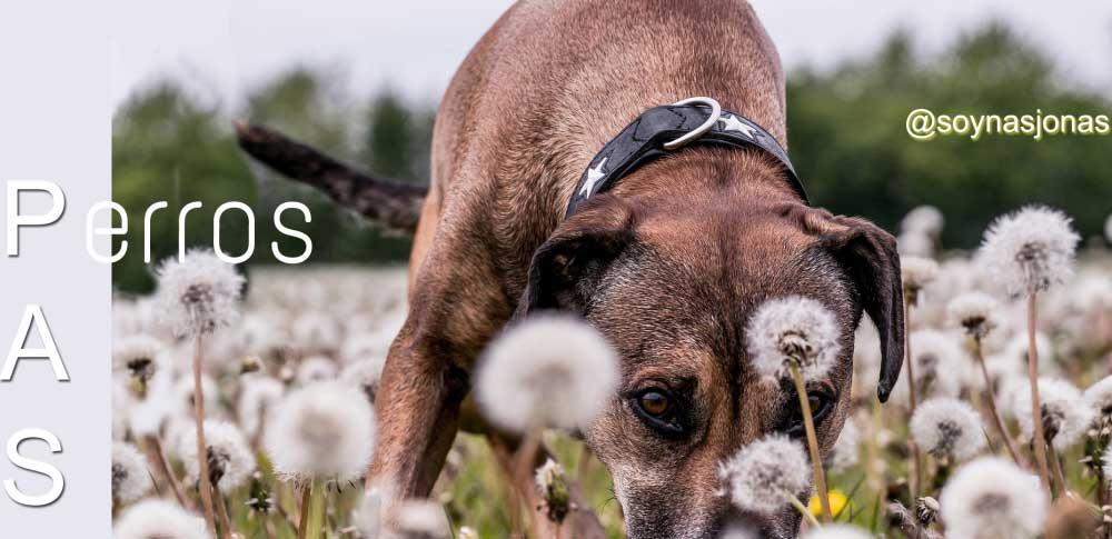 perros-altamente-sensibles